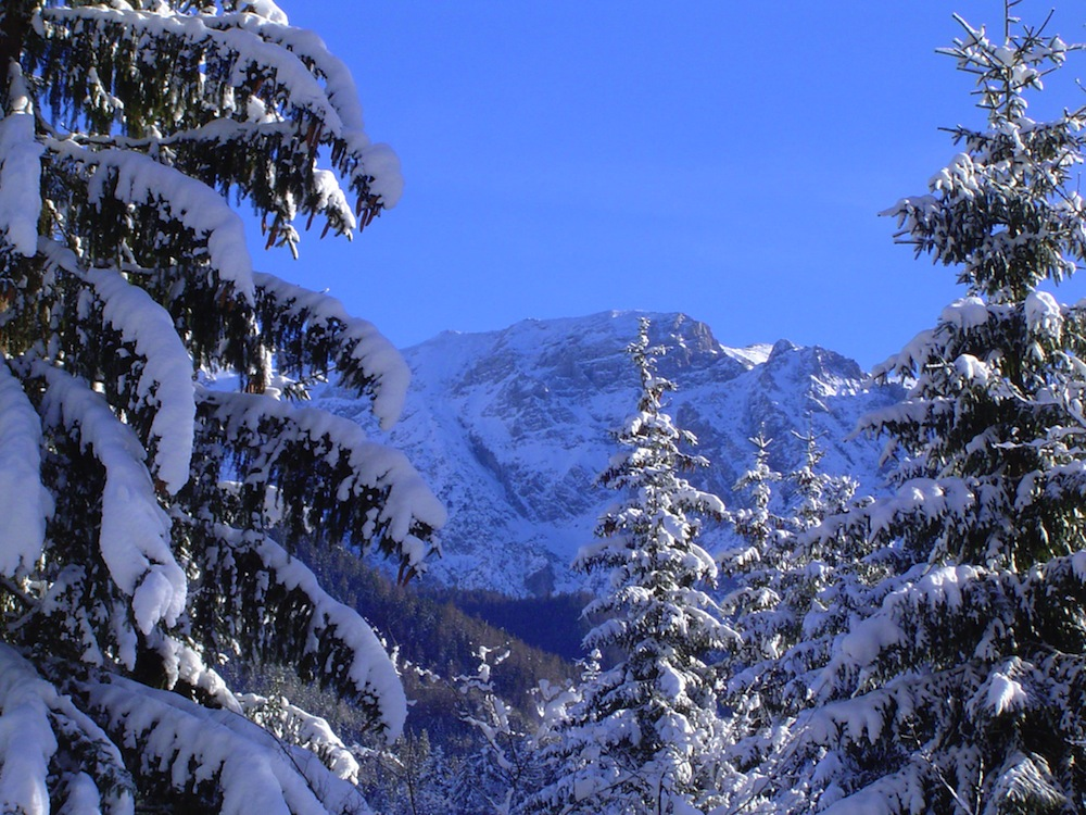 Trees And Ski Resort In Austria