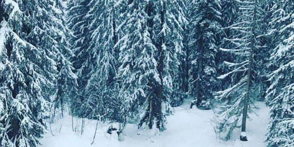 Morzine Ski Resort (5)